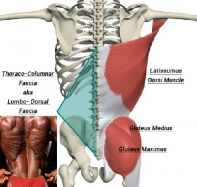 A simple cure for chronic backache.